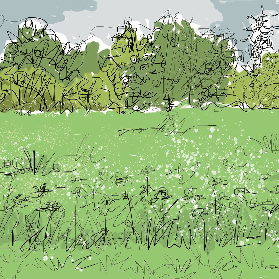 Meadow/unimproved grassland